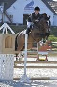 Hest til salg - Q2