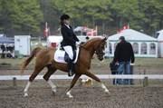 Hest til salg - TOFTEGÅRDENS AQUI