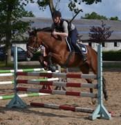 Hest til salg - NAVOY HOEJGARD