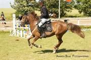Hest til salg - CACAHONETTE