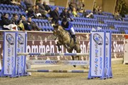 Hest til salg - JEDIDJAN CLAUDIUS