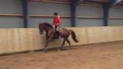Hest til salg - Lindholm's Michell