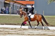 Hest til salg - WOLHØJGAARD'S DE VINCI