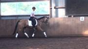 Hest til salg - WEBSTER