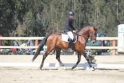 Hest til salg - Fausto