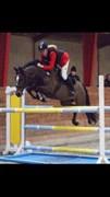 Hest til salg - FRIIS MAESTRO