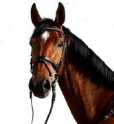 Hest til salg - PINJATA