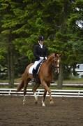 Hest til salg - CHARLATAN