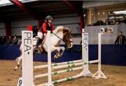 Hest til salg - SPRINTER