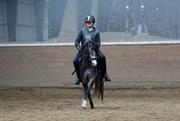 Hest til salg - Clausholm Silver Stone