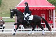 Hest til salg - SALEEN