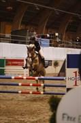 Hest til salg - HELLESKOV'S GOLDEN QUEST