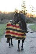 Hest til salg - BRODERIGÅRDENS LADY DANCER