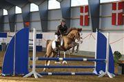 Hest til salg - ZIWAGO