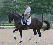 Hest til salg - Showbiz