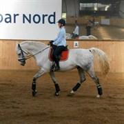 Hest til salg - TORNADO