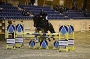 Hest til salg - GOUVERNEUR 58