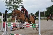 Hest til salg - Casmir
