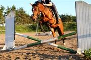 Hest til salg - TOLIENES LABELLA