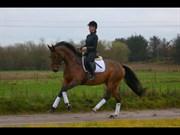 Hest til salg - Chanel
