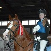 Hest til salg - Remy