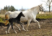 Hest til salg - Bibalou