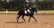 Hest til salg - JOLENE HILL