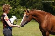 Hest til salg - GINGER