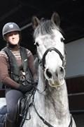 Hest til salg - BALTHAZAR