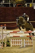 Hest til salg - MY LAMBORGHINI GRAFTEBJERG