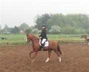 Hest til salg - Lucilla