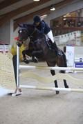 Hest til salg - RØNNEMOSES LANCELOT