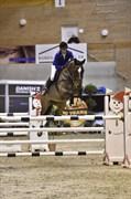Hest til salg - TRY TO BEAT ME