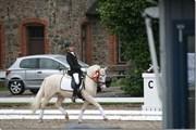 Hest til salg - DRYFE STARRY KNIGHT