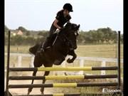Hest til salg - BLACK PEARL HØJGÅRD