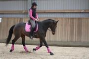 Hest til salg - VERONA-ALSIDIG
