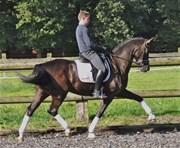 Hest til salg - RAPPHILDE