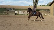 Hest til salg - SKOVLY'S KARINA