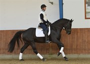 Hest til salg - 4 års vallak
