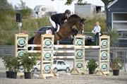 Hest til salg - WESTERGAARDENS FLEUR