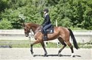 Hest til salg - GABRIELA