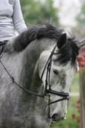Hest til salg - MY RANDOM SWEETHEART