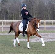 Hest til salg - ORCHID'S MONICA
