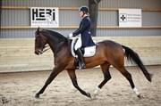 Hest til salg - NOBLE FELLINI V.