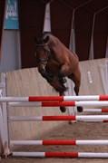 Hest til salg - CARNUTCETT