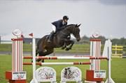 Hest til salg - Jaguline Kilen