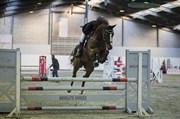 Hest til salg - QURALLI