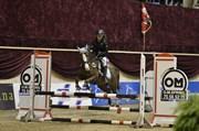 Hest til salg - CAIRO