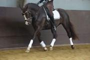 Hest til salg - Nisgaards Ballantine