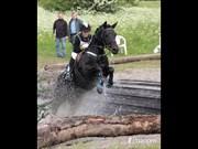 Hest til salg - THORNDALS ALPHA